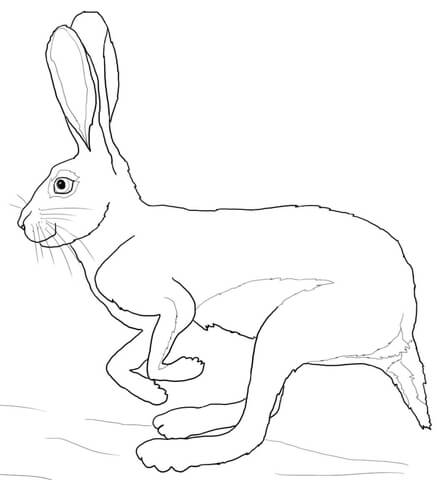 447x480 Running Desert Hare Coloring Page Free Printable Coloring Pages