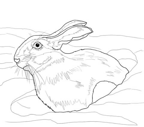 480x423 Snowshoe Hare In Snow Drift Coloring Page Free Printable