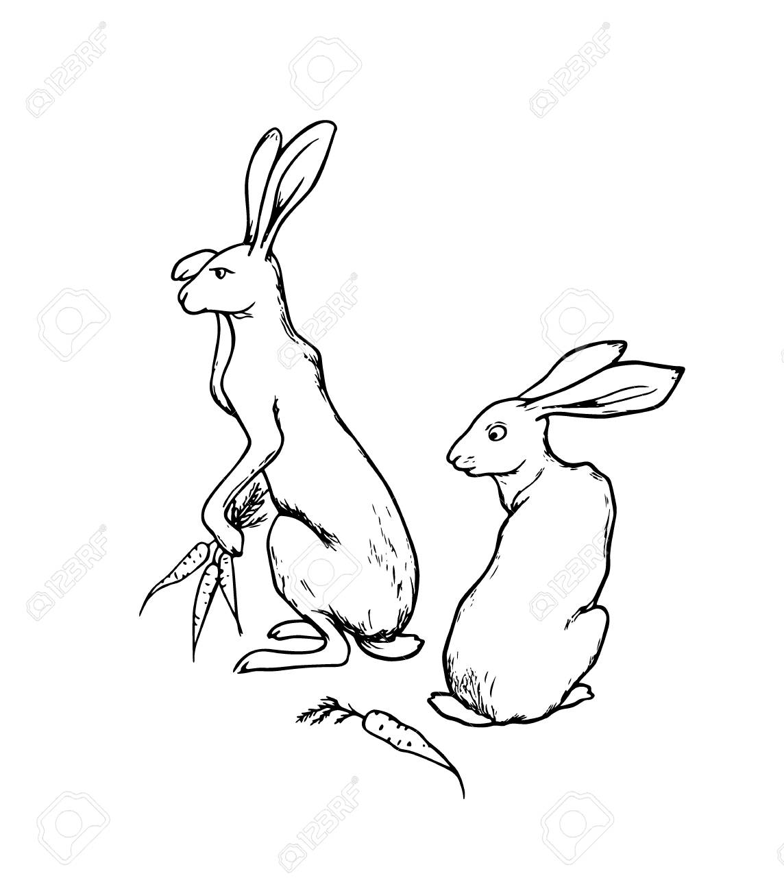 1144x1300 Vector Illustration Of Hand Drawn Cute Hares With Carrots