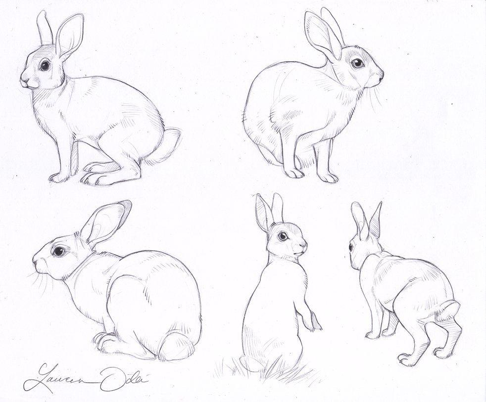 982x813 Wild Rabbit Study By Daffodille