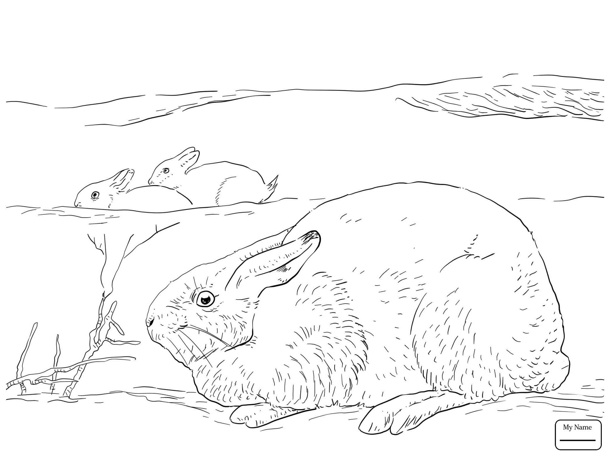 2089x1567 Arctic Hare Coloring Page Coloring Page For Kids
