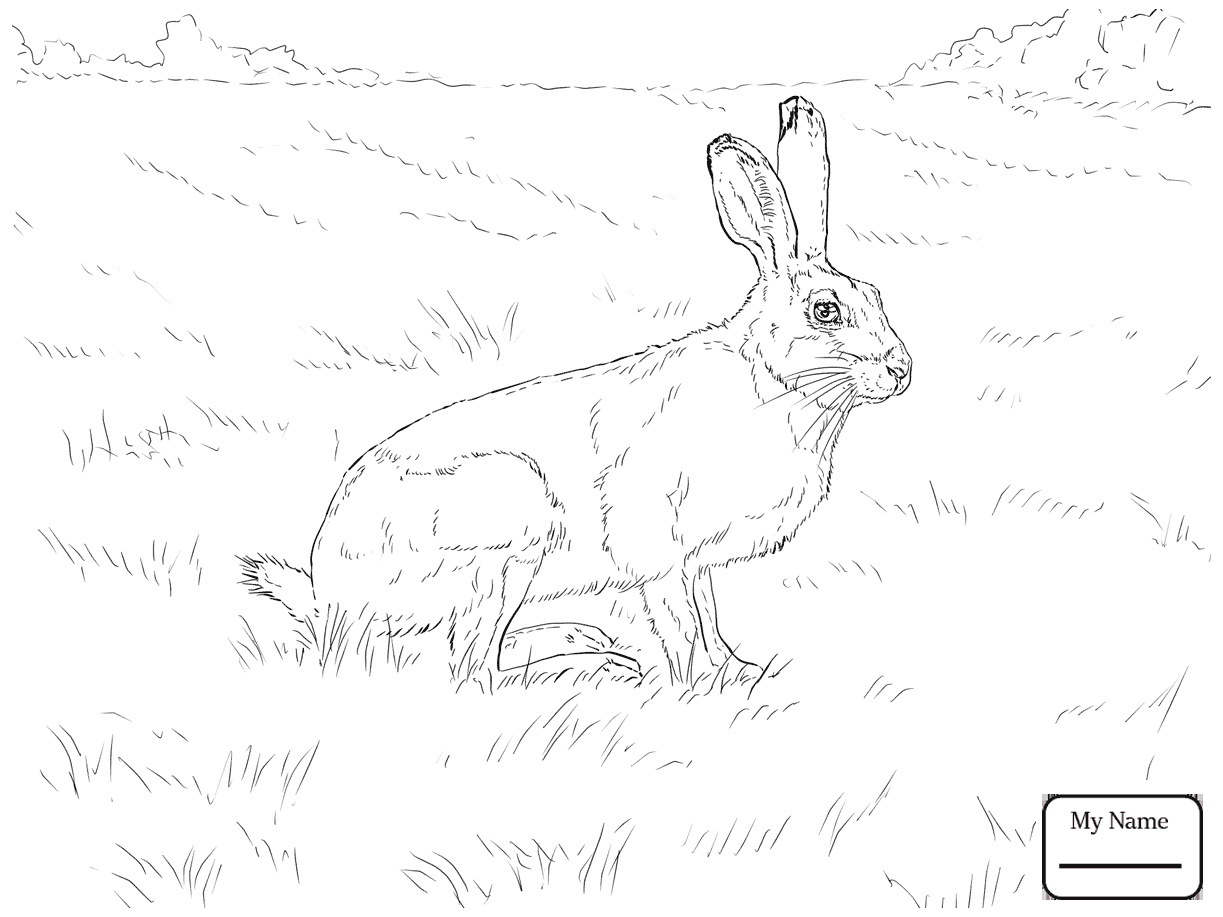 1223x917 Hares Mammals Cartoon Hare Coloring Pages