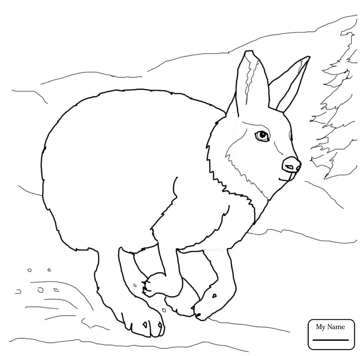 1224x1208 Mammals Hare 10 Hares Coloring Pages For Kids