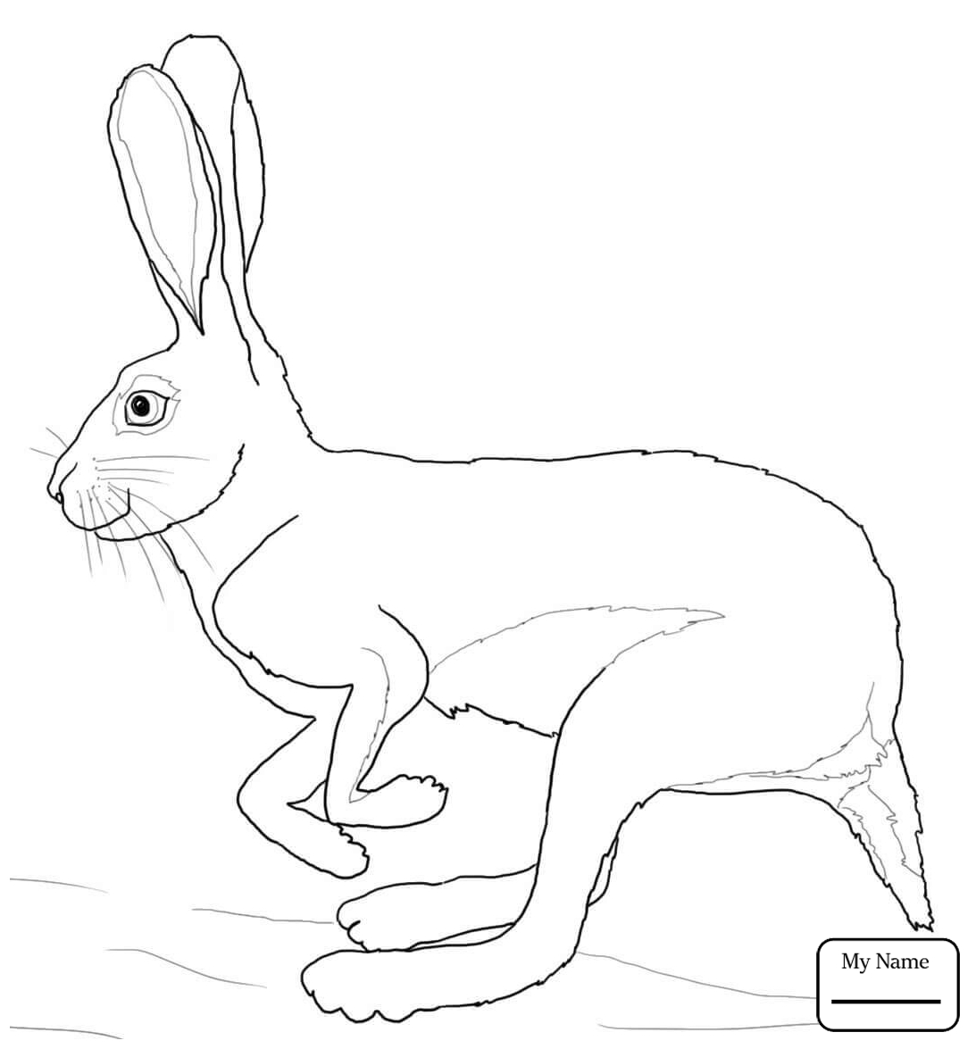 1093x1175 Mammals Hare 9 Hares Coloring Pages