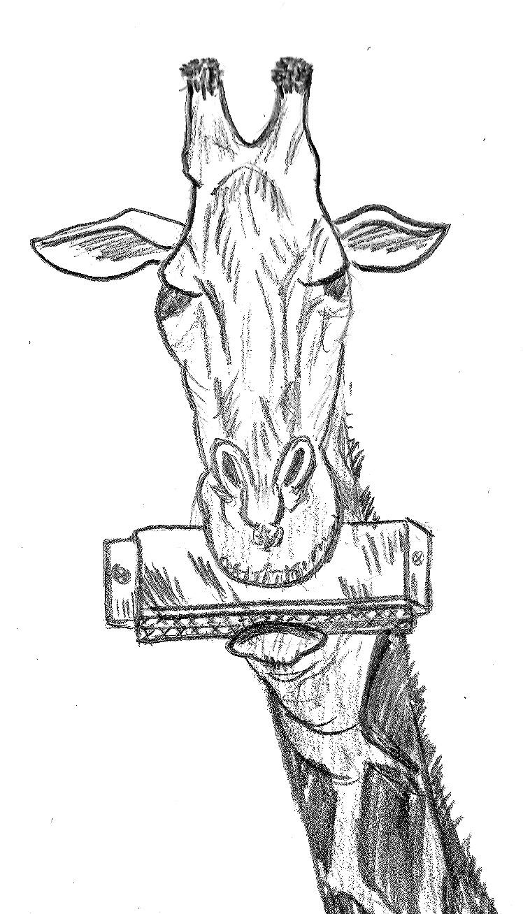 748x1308 Giraffe Playing A Harmonica By Paul281f