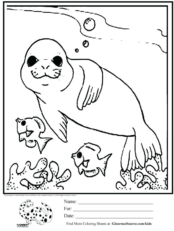 736x976 Baby Seal Coloring Pages Big Smile Seal Coloring Page Free Baby