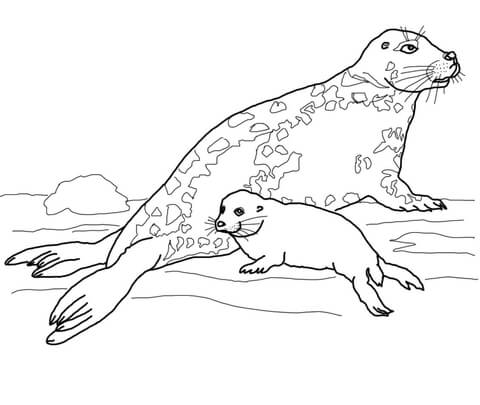480x405 Gray Seal Mother And Baby Coloring Page Free Printable Coloring
