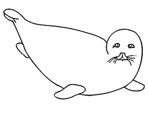 480x377 Little Fur Seal Coloring Page Free Printable Coloring Pages