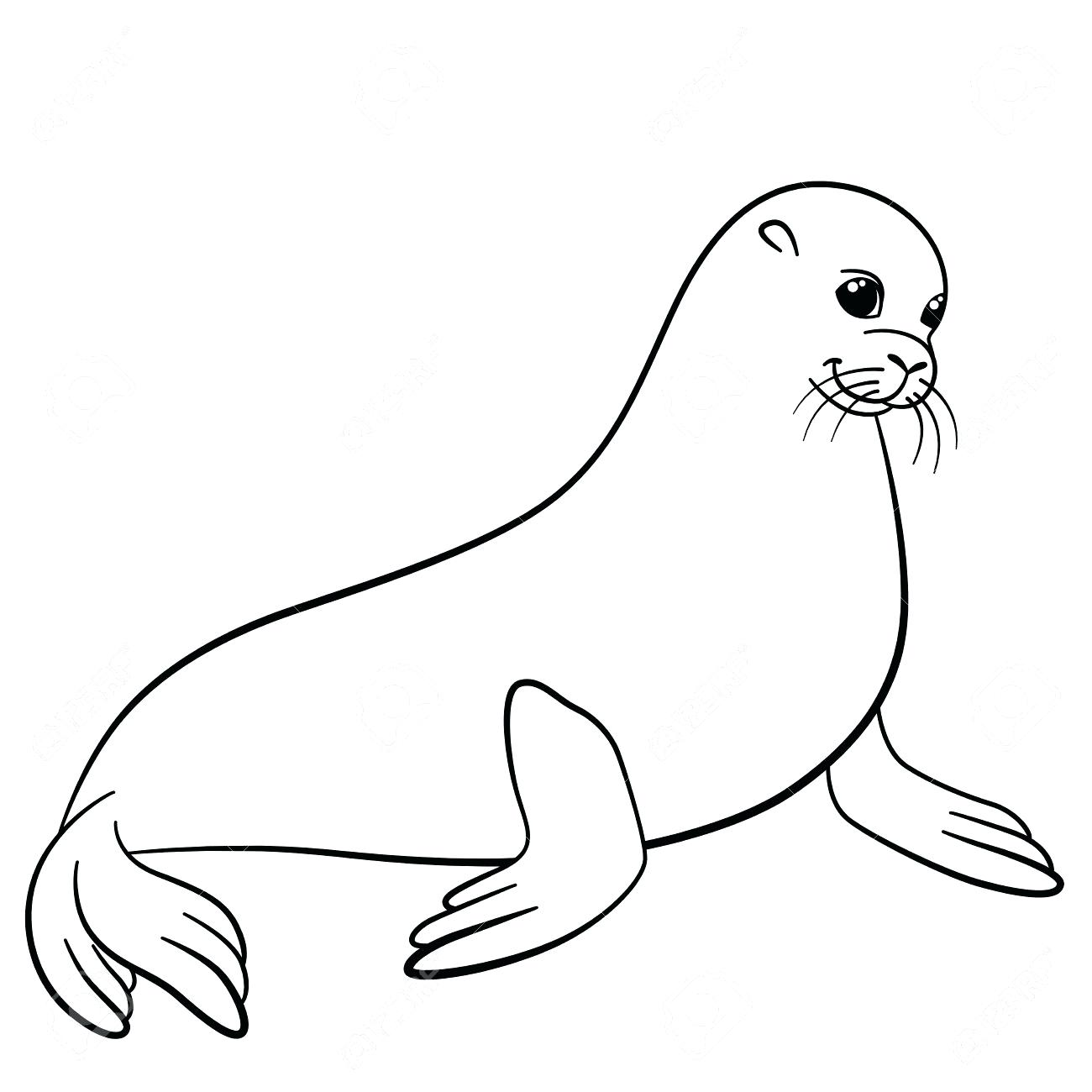 Harp Seal Drawing at GetDrawings.com | Free for personal use Harp ...