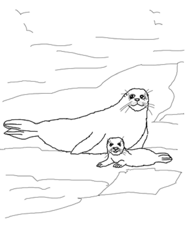 650x865 Printable Coloring Page Of Harp Seal For Kids Coloring Pages