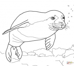 257x230 Baby Harp Seal Coloring Page Free Printable Coloring Pages