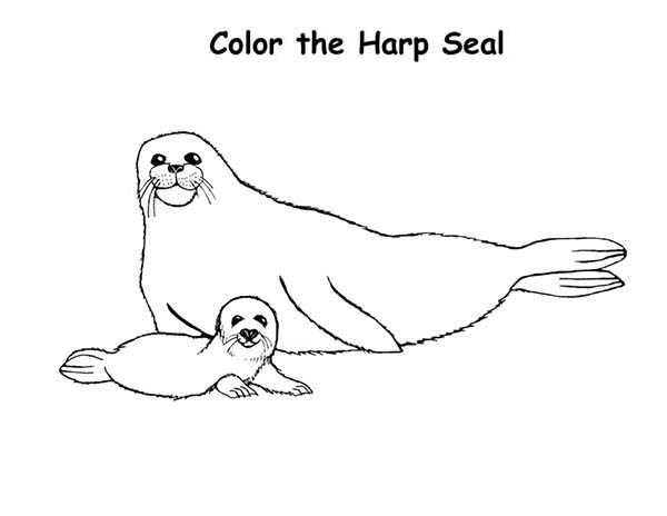 600x464 Baby Harp Seal Coloring Pages Coloring Page For Kids