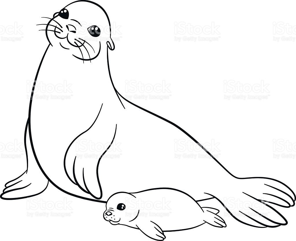 1024x835 Baby Harp Seal To Color Mom And Baby Harp Seals