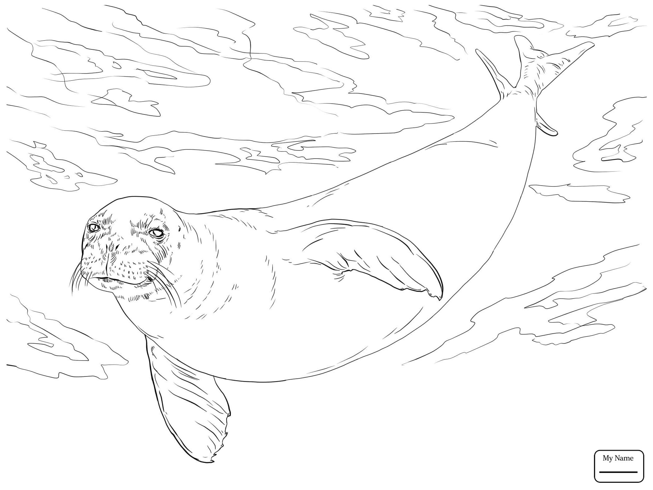 2089x1567 Baby Harp Seal Seals Mammals Seals Coloring Pages