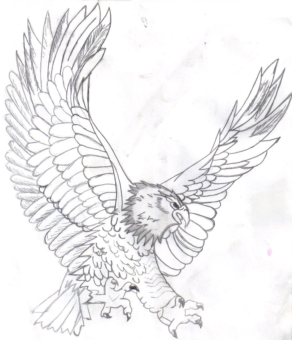 Harpy Eagle Drawing at GetDrawingscom Free for personal use Harpy