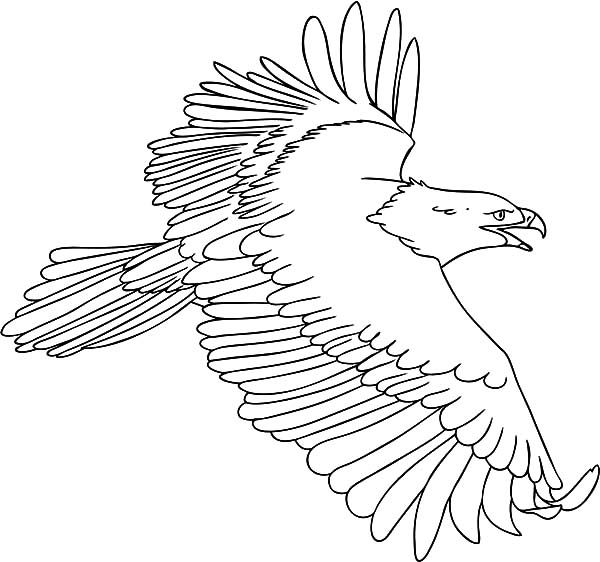 600x562 Harpy Eagle Coloring Pages For Kids Coloring Sun Sewing