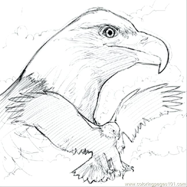 650x650 Bald Eagle Coloring Pages Eagle Color Page Drawing Flying Eagle
