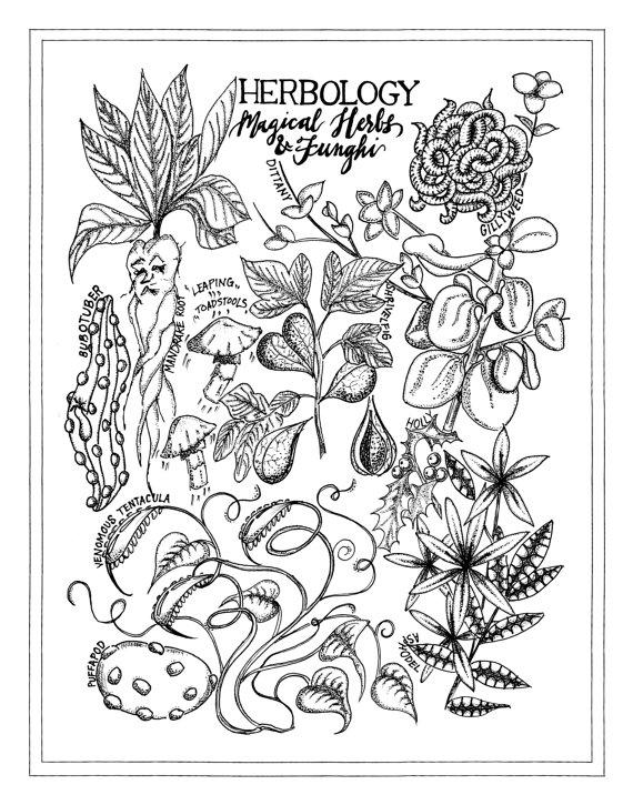 570x725 Harry Potter Herbology Chart Artist Print Harry Potter Art