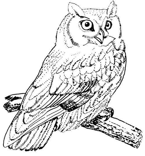 500x538 Burrowing Owl Clipart Harry Potter Owl