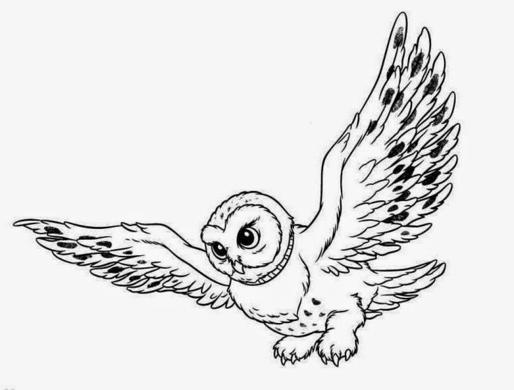 Harry Potter Owl Drawing