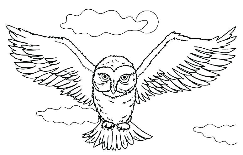 775x497 Coloring Pictures Of Owls Harry Potter Owl Coloring Pages Media