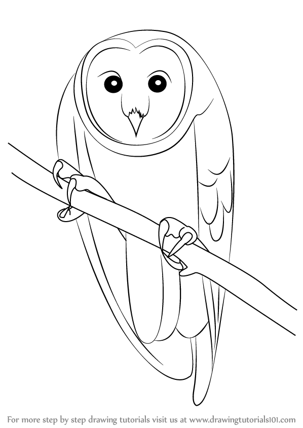 598x844 Learn How To Draw An Australian Masked Owl (Birds) Step By Step