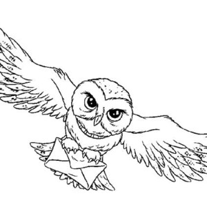 300x300 Owl, Harry Potter Owl Coloring Page Harry Potter Owl Coloring