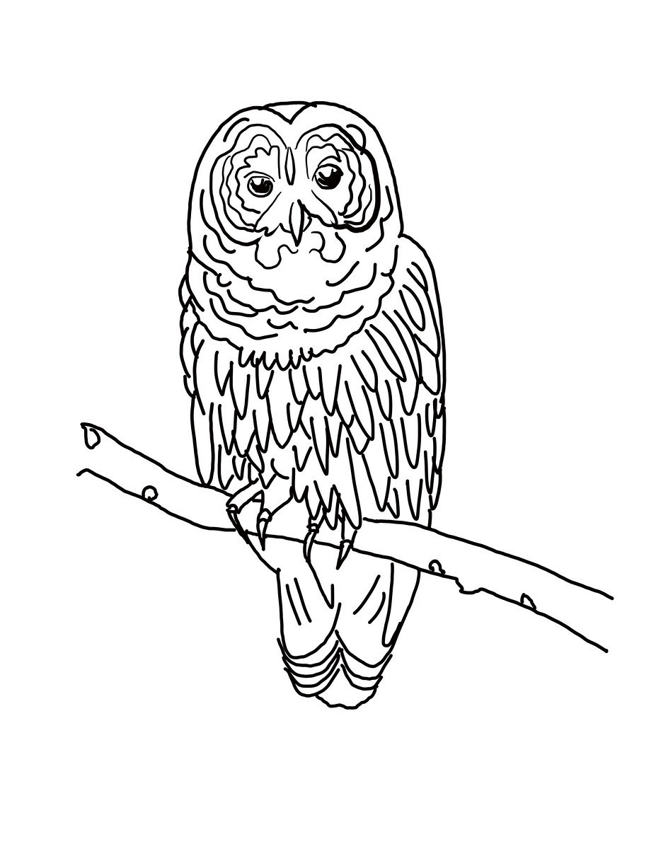927x1200 Adult Owl Coloring Page