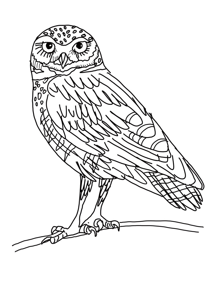 927x1200 Barred Owl Clipart Burrowing Owl