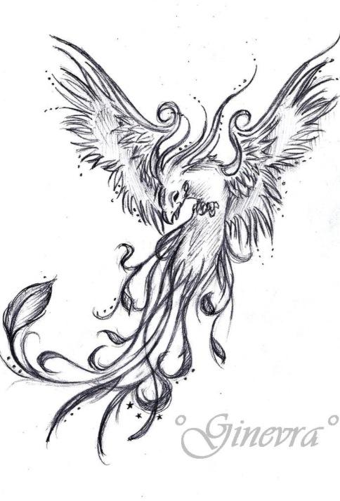 484x713 Tattoo Sketch