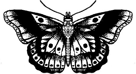 451x247 Harrys Butterfly Tattoo Stickers By Celia And Paige Redbubble