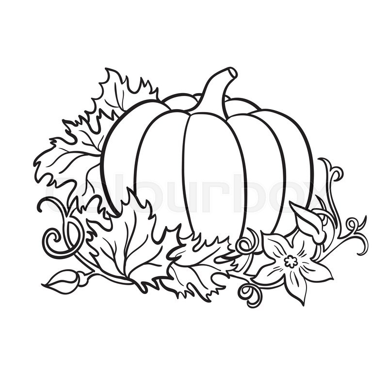 800x800 Pumpkin Vector Drawing. Isolated Outline Vegetable With Leaves