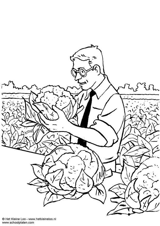 618x874 Coloring Page Harvesting Cauliflower