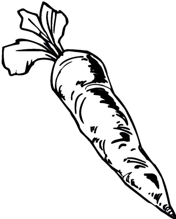 600x744 Harvesting Carrot Coloring Pages Best Place To Color
