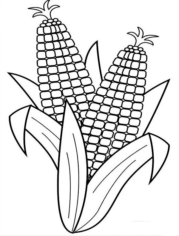 600x790 Harvesting Corn Coloring Page Coloring Sun