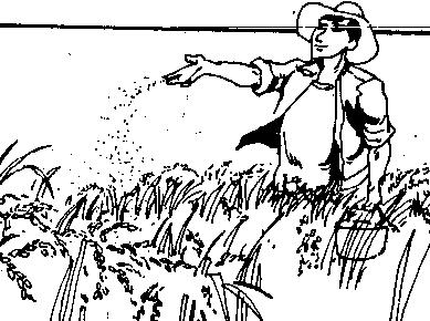 389x290 Maximizing The Dry Season For Post Rice Alternatives