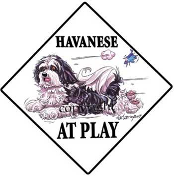 350x353 Havanese