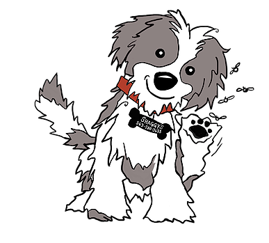 Havanese Drawing at GetDrawings com | Free for personal use