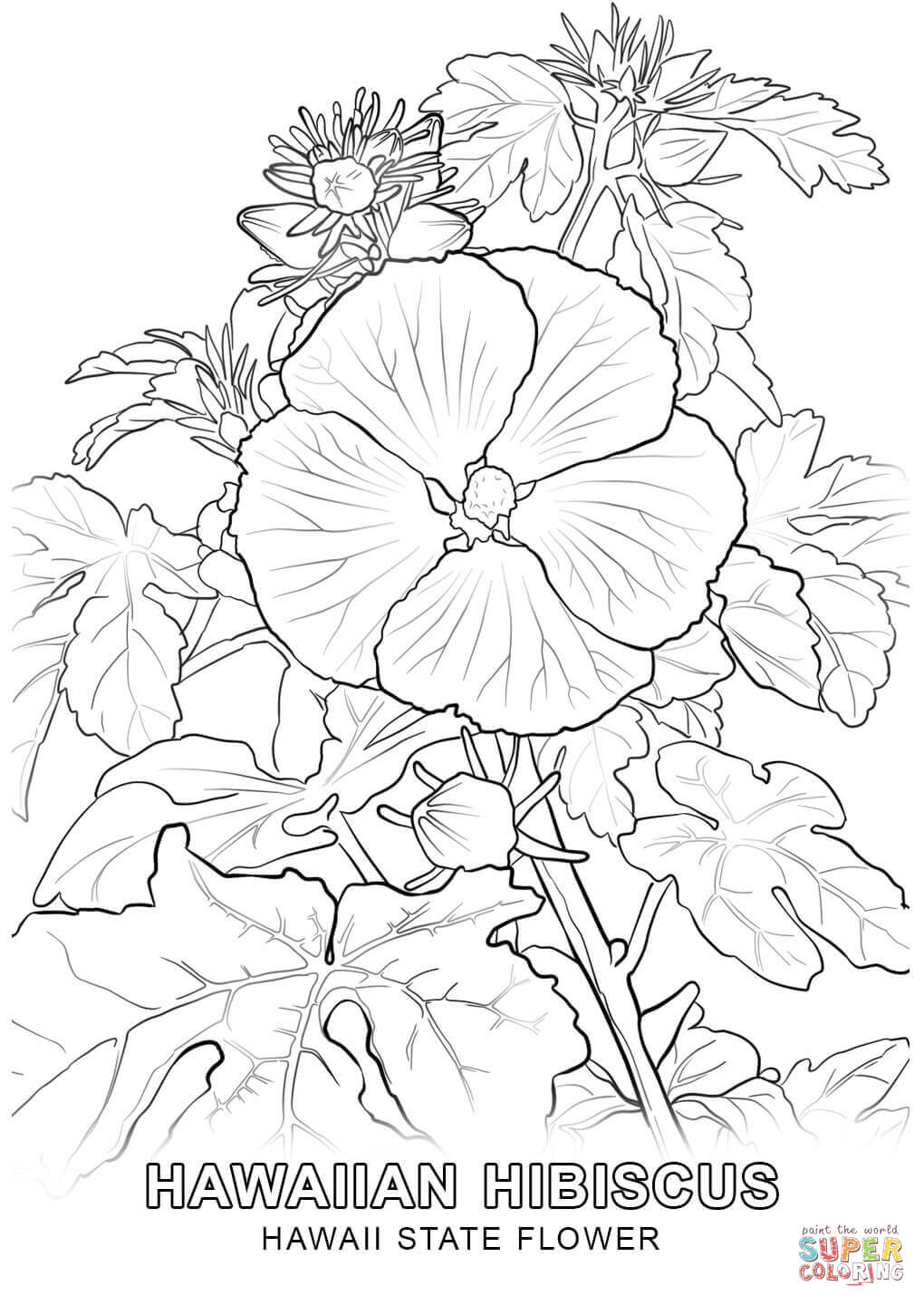 1020x1440 Hawaii State Flower Coloring Page Free Printable Coloring Pages