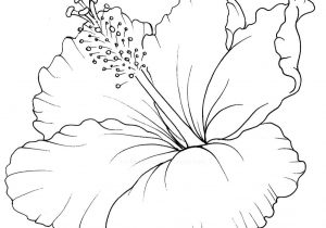 300x210 Hawaiian Flower Drawings Hawaiian Flower Drawings Simple Flower