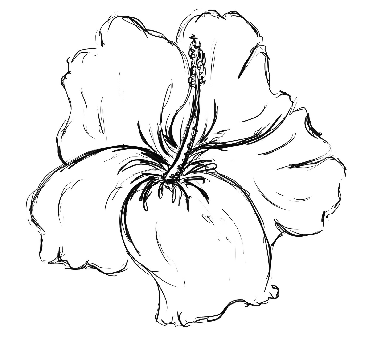 1600x1441 How To Draw A Hawaiian Flower Step By Step