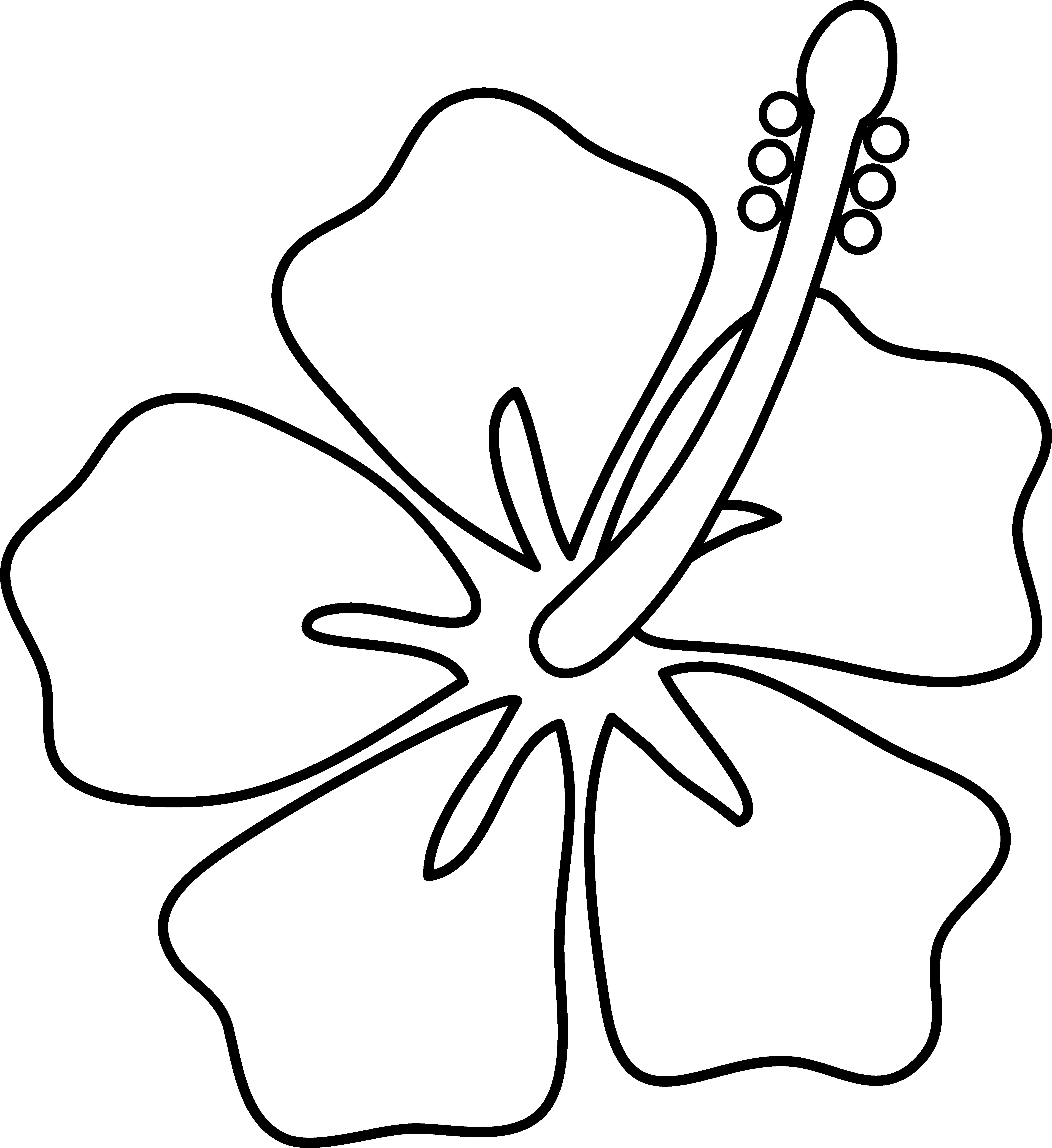 5922x6462 Drawings On Hawaiian Flowers Best 15 Post Media For Cartoon