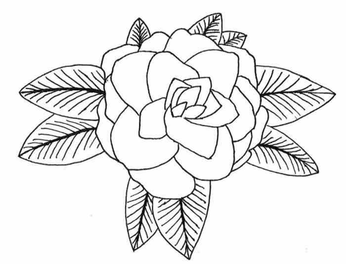 700x534 Hawaii State Flower Coloring Page Pictures Reference