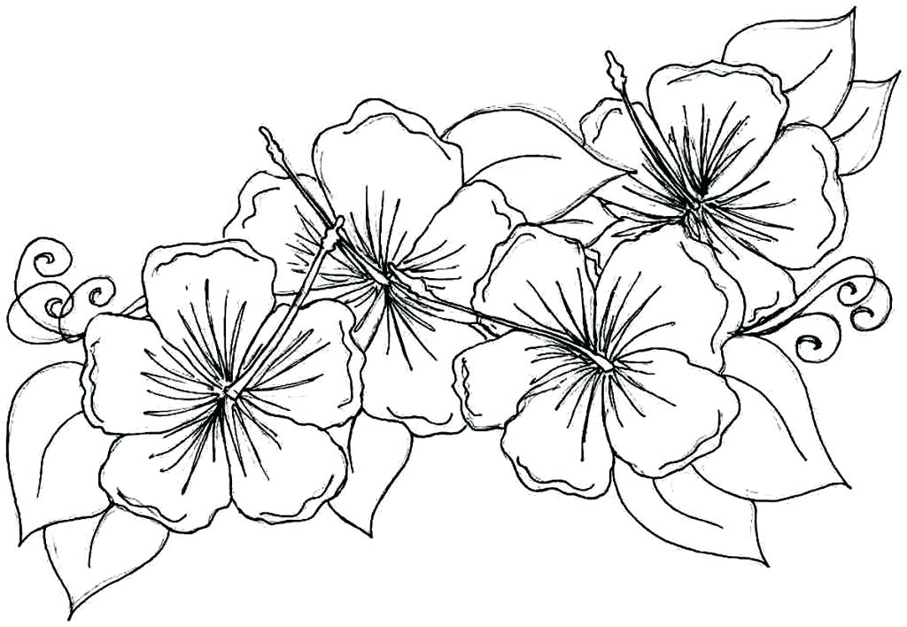 1024x708 Hawaiian Flower Coloring Pages Best Tropical Flower Coloring Pages