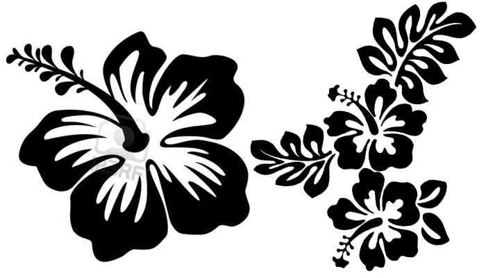 Line Art Flower Drawing : Hawaii flower drawing at getdrawings free for personal use