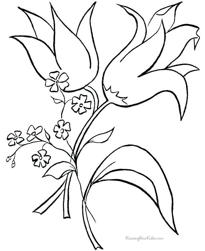 670x820 Hawaiian Flowers Coloring Pages Astonishing Flowers To Color Free