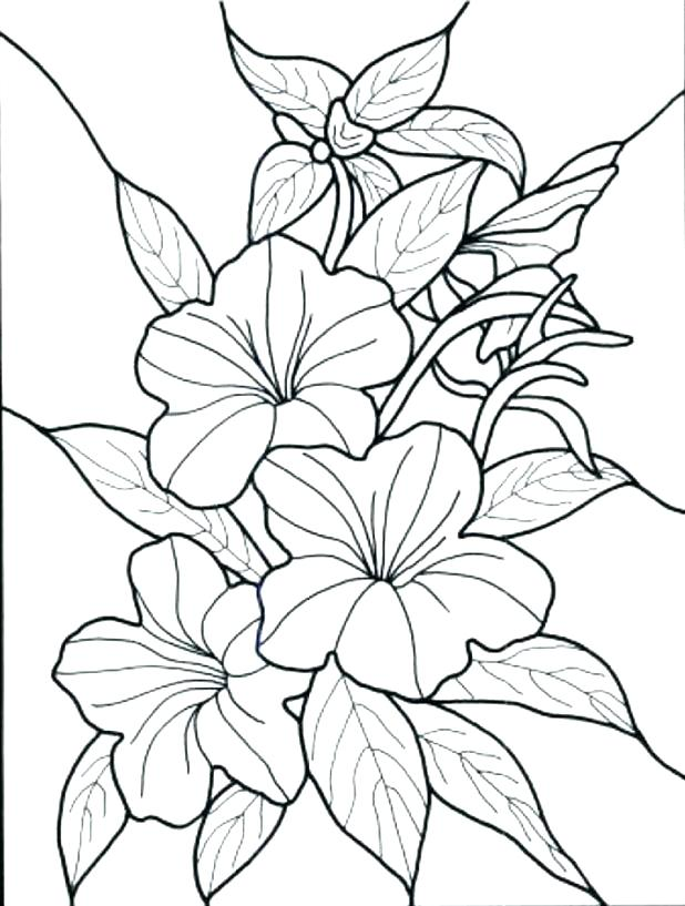 618x817 Hawaiian Flowers Coloring Pages Girl Coloring Pages Terrific Page