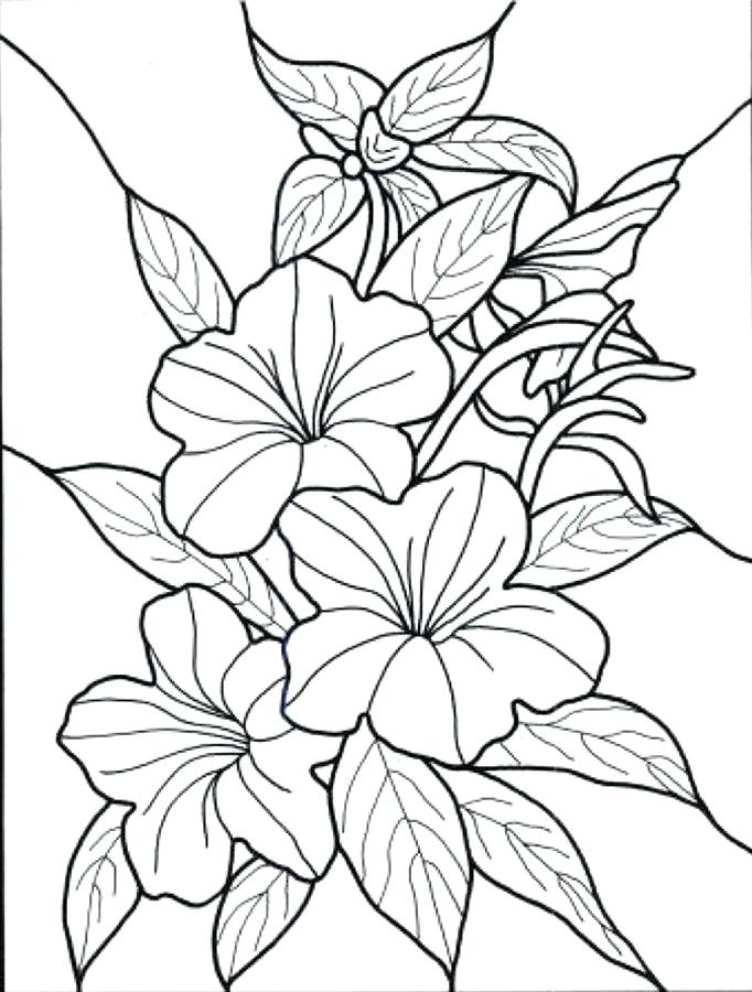 682x900 Hawaiian Flowers To Color Drawn Hibiscus Flower 1 Free Printable