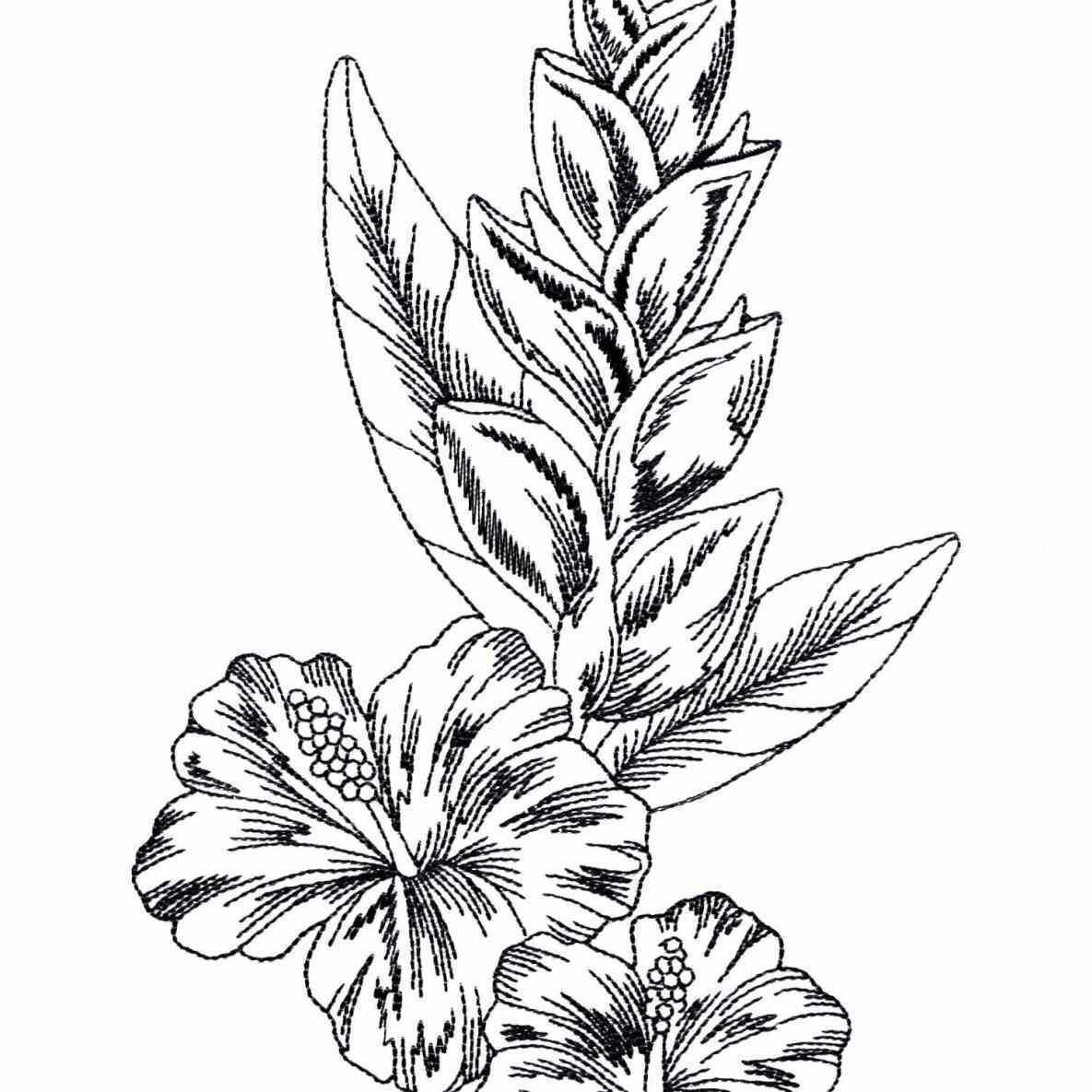 1185x1185 Rainforest Flowers Drawing