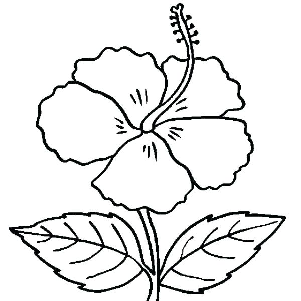 600x600 Hawaiian Flower Coloring Pages